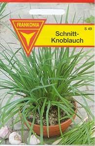 Frankonia S49 Schnitt-Knoblauch, mehrjährig, Samen