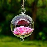 Bluelover Forme De Boule, Vase En Verre Avec Décor De Jardin Pot De Fleurs Crochet De Suspension