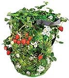 Esschert Design Erdbeer/Kräuter Pflanztasche, grün, 33.5 x 33.5 x 44.5, B1004