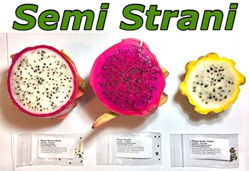30-graines-de-pitaya-pitahaya-le-fruit-du-dragon-en-3-varietes-blanche-rose-et-jaune