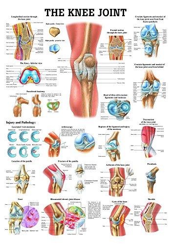 Ruediger Anatomie CH33 The Knee Joint Tafel, englisch, 70 cm x 100 cm, Papier