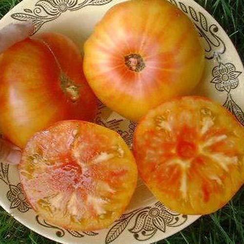 """Tomate""""Ananas"""" 10 x Samen 100% natürlich ohne chemische Anzuchthilfen oder Gentechnik aus Portugal - herrlich fruchtiger Ananas-Geschmack"""