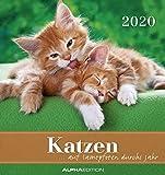 Katzen 2020 - Postkartenkalender (16 x 17) - Cats - zum aufstellen oder aufhängen - Geschenkidee - Tierkalender - Gadget - ALPHA EDITION