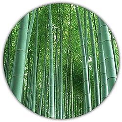 Bambú gigante (bambú moso) / 50 semillas / Planta de invierno / Crece 10 metros en tiempo récord / Ideal como protección visual y frente al viento