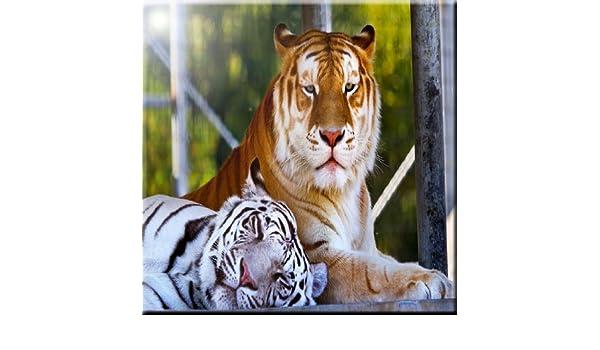 12 x 12 Rikki Knight Tiger Design Ceramic Art Tile