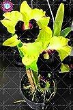 Shopmeeko Bonsai 100 samen/pack Bonsai Schwingel Gras Festuca mehrjährig winterhart dekorativ leicht für den Hausgarten zu züchten: 17
