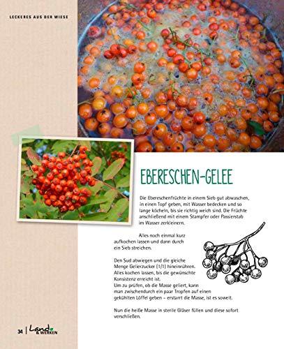 Kräuterkauz: Die faszinierende Welt der essbaren Wildpflanzen - 4