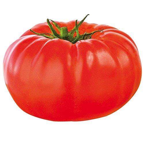 Jardin Express XH77 6 Prestimottes Tomate F1 Buffalosteack, Multicolore, 24.5 x 24 x 4.2 cm
