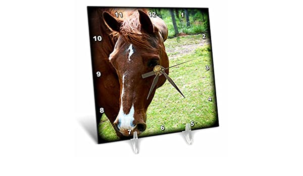 3dRose dc/_218801/_1 Dark Brown Horse Head is A Front Photo of A Beautiful Horse Desk Clock 6 by 6