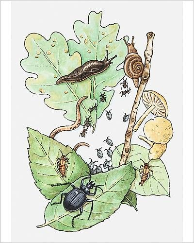 photographic-print-of-illustration-of-insects-leaves-and-fungus