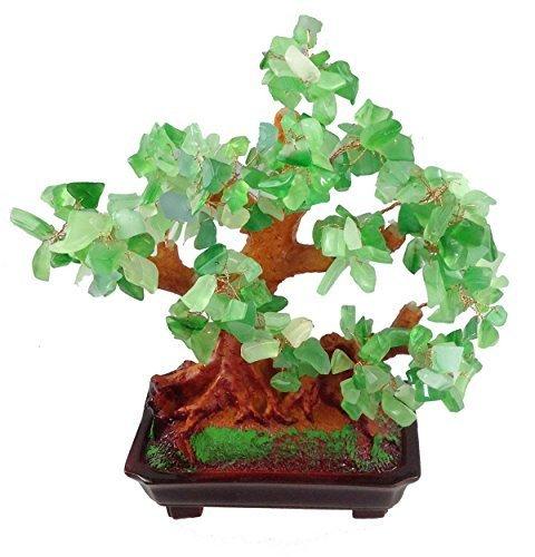 Geldbaum Benötigt wenig Wasser