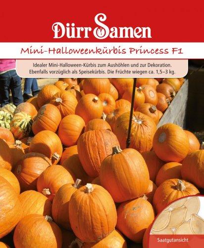 Dürr Samen 1922 Mini-Halloween-Kürbis Harvest Princess F1 (Halloween-Kürbissamen)