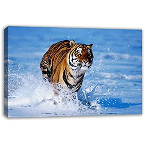 Stunning Tiger in the Surf Natura Stampa Su Tela, 30X18
