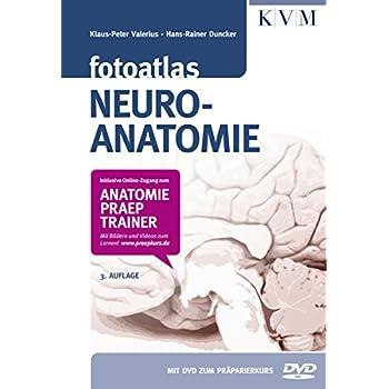 PDF] Fotoatlas Neuroanatomie (Inkl. buchgegleitender DVD und Online ...