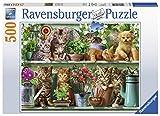Ravensburger Erwachsenenpuzzle 14824 Ravensburger 14824-Katzen im Regal-Erwachsenenpuzzle