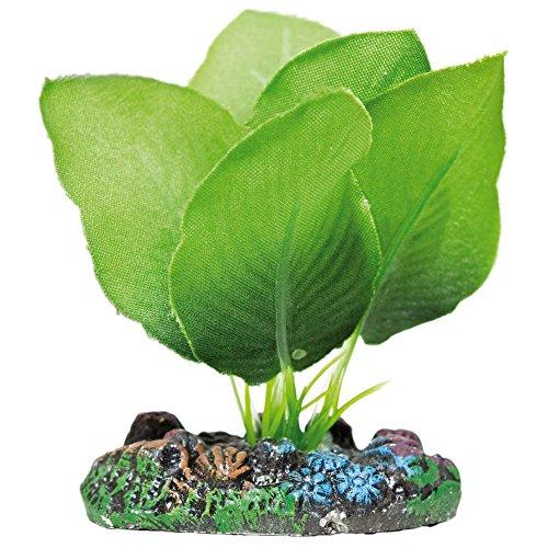 ICA AP1103 Anubias de Aquatic Plants Seda