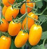 AGROBITS Sapore di pomodoro Giallo Plum Heirloom dolce ricco di pomodoro! Produrre Fino al gelo