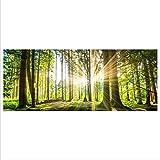 gsmarkt | Wald Echtglas Premium Panorama Glasbilder Glasbild Echtglas Wandbild Deko Deco Glass 125x50 xxl