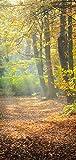 Türtapete Türposter selbstklebend – Waldweg im Herbst - 90x205cm und 100x210cm - Fototapete Poster Türfolie Tapete – T00110