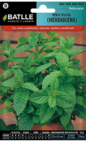 Batlle Kräutersamen - Mentha Spicata/Grüne Minze (Samen - 40-50cm)