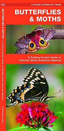 (Butterflies & Moths: A Folding Pocket Guide to Familiar North American Species (Pocket Naturalist Guide Series))