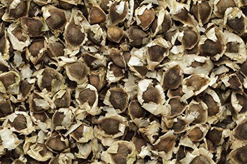 Moringa oleifera - 20 Samen - Meerrettichbaum !