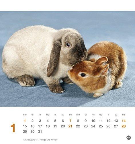 Kaninchen Postkartenkalender – Kalender 2018 - 2