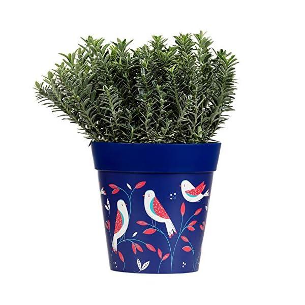 Hum Flowerpots Jardinera