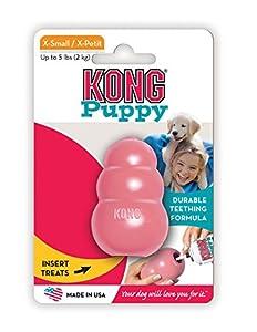 Kong Chiots