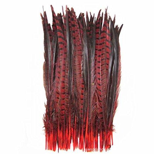 r Fasan Federn Fasan Tails 35,6-40,6cm (35-40cm) rot ()