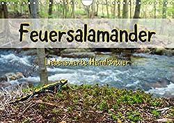 Feuersalamander - Liebenswerte Heimlichtuer (Wandkalender 2020 DIN A4 quer)