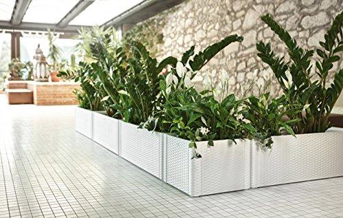 xl pflanzkasten im rattan design aus kunststoff in anthrazit mit wasserspeicher und. Black Bedroom Furniture Sets. Home Design Ideas