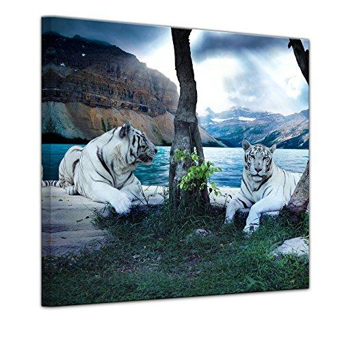 Bilderdepot24 Immagine su telaio a cunei Tigre II - 60 x 60 cm - Già montato sul telaio, Stampa artistica intelaiata e pronta da appendere