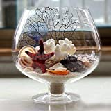 ABG Flower Plant Glass Vase Terrarium Wine Glass Decor. BIGGEST SIZE. WITH COLORFUL GLASS STONES
