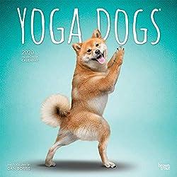 Yoga Dogs - Joga-Hunde 2020 - 18-Monatskalender: Original BrownTrout-Kalender [Mehrsprachig] [Kalender]