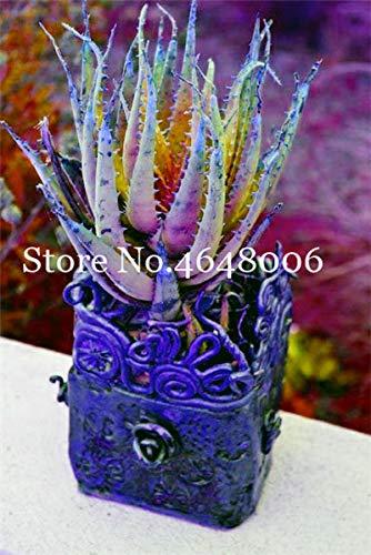 AGROBITS semi: 120 pezzi di Aloe Vera Bonsai Rare Succulente fortunato Aloe semi bonsai da interno Edi bellezza Frutta Veget Pentole semi facile da coltivare: un