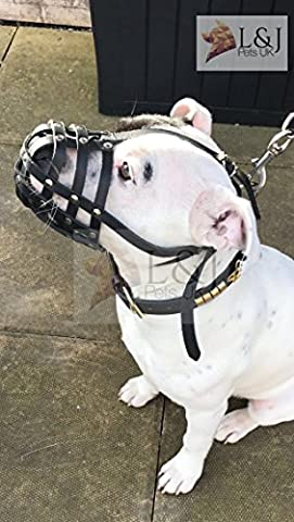 Light Real leather Dog Muzzle for Staffordshire Bull Terrier Staffy , Staffie (Black, S1)