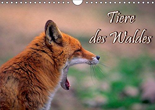 Tiere des Waldes (Wandkalender 2019 DIN A4 quer): Naturkalender mit 13 Tiermotiven (Geburtstagskalender, 14 Seiten ) (CALVENDO Tiere)