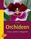 Orchideen: Farbig, exotisch, pflegeleicht