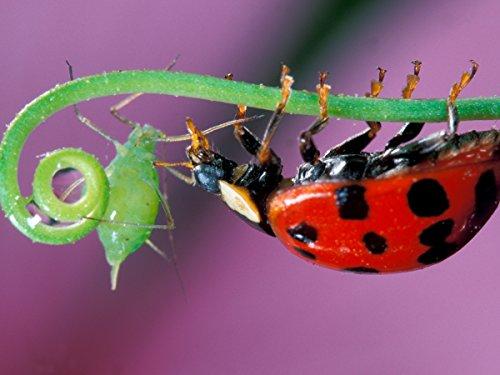 Die fabelhafte Welt der Insekten Teil 1