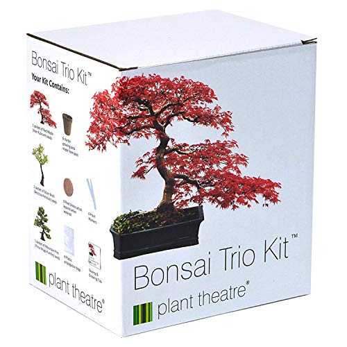 3 distintivi bonsai da coltivare