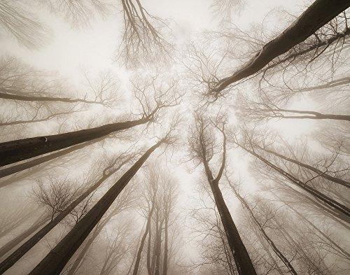 JP London cnv1X 1090059Igor tinak Treetops Sky Greifhilfen Sepia Elektrische Silhoutte 5,1cm Dick Schwere Galerie Wrap auf Leinwand, 2'x 1,5' (Portfolio Wallpaper)