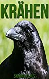 Kinderbuch: Erstaunliche Fakten & Bilder über Krähen