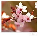 Wallario Herdabdeckplatte / Spitzschutz aus Glas, 1-teilig, 60x52cm, für Ceran- und Induktionsherde, Frühlingsgefühle II - Kirschblüten in Nahaufnahme