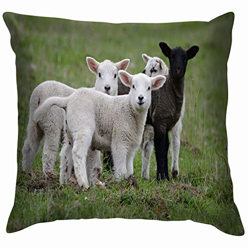 beautiful& Youngh Lamb Farmers Northland Northumbria Norway Animals Wildlife Sheep Nature Pillow Case Throw Pillow Cover Square Cushion Cover 18X18 Inch