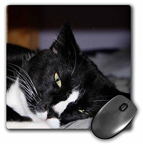 Tuxedo Katze schwarz und weiß liegend ein Auge offen–Maus Pad, 8von 20,3cm (MP _ 156276_ 1)