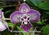 Farbenreiche Orchideen (Wandkalender 2019 DIN A3 quer): Ein sehr exotischer Kalender über Farbenreiche Orchideen (Monatskalender, 14 Seiten ) (CALVENDO Natur)