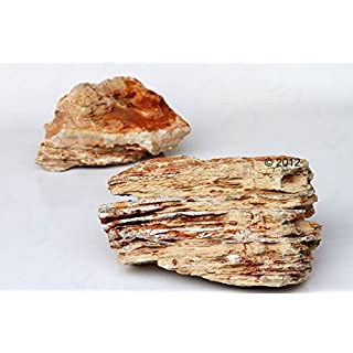 Attractive Layered Natural Rock - Light Beige, Canyon-style from Asia, Helps you to Create Amazing Aquascapes (- 100 cm Set: 10 natural rocks, approx. 13 kg)