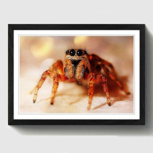 BIG Box Art Jumping Spider Print mit schwarzem Rahmen, Mehrfarbig, A2, 24,5x 18_ P, Holz, schwarz, 24.5 x 18-Inch (Spider Jumping Schwarzes)