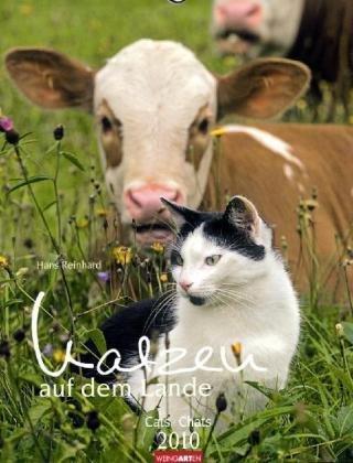 Katzen auf dem Lande 2010 / Cats 2010 / Chats 2010